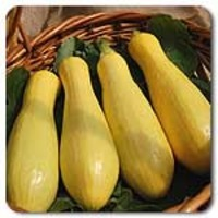 Success-pm-summer-squash-01